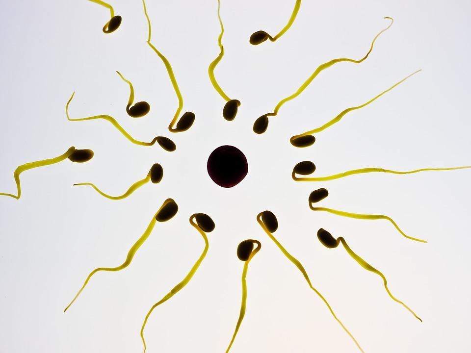 Twee moeders en een spermadonor