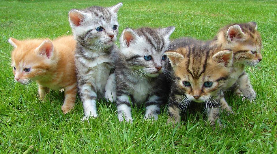 Uitspraak kattenzaak.