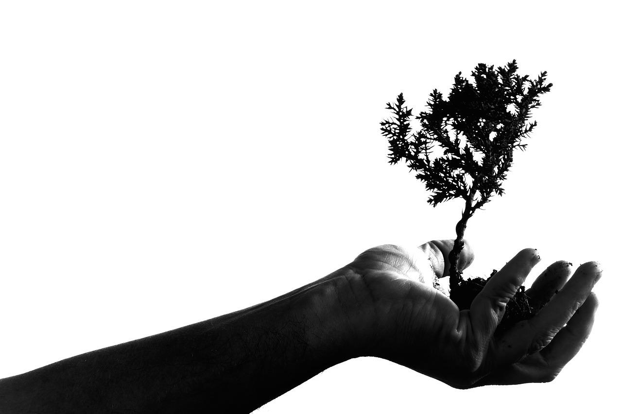 Bomen, hagen en heesters